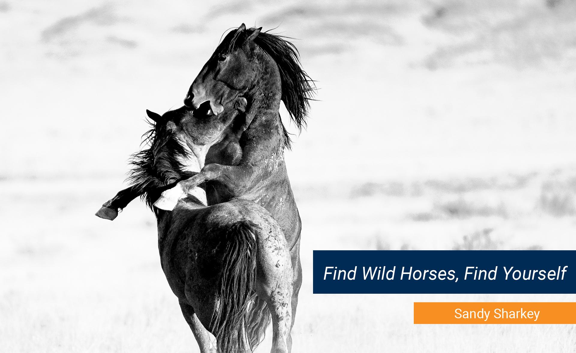 "Sandy Sharkey ""Find Wild Horses, Find Yourself"""