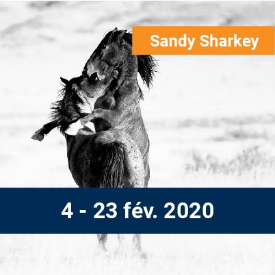 Sandy Sharkey